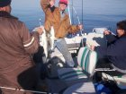 Lake Texoma striper fishing report from stripermaster