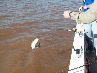Striper Master Lake Texomas Guide service