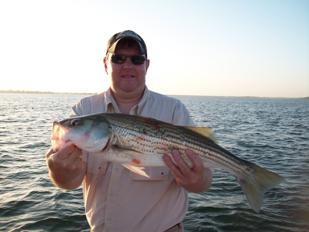 Fishing pictures of lake texoma striper fishing guide for Striper fish pictures